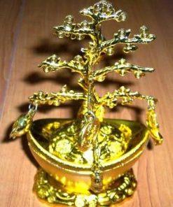 Copacul vietii -  remediu Feng Shui