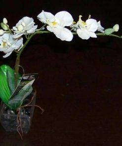 Orhidee alba in vas transparent remediu pentru baie